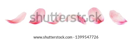 Set of pink peony petals isolated on white