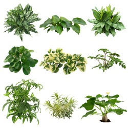 Set of plants isolated on white background. Cutout vegetation for garden design or landscaping. High quality clipping mask for professionnal composition.