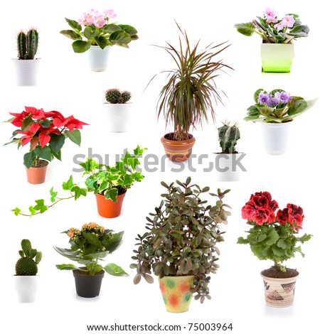 Set of potted plants on a white background