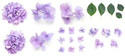 Set of Purple Hydrangea Hortensia flowers and leaves elements, isolated on white design background, with real shadows