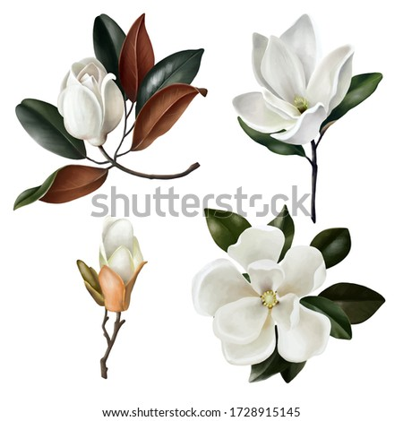 Set of realistic botanical magnolias flowers, leaves and buds