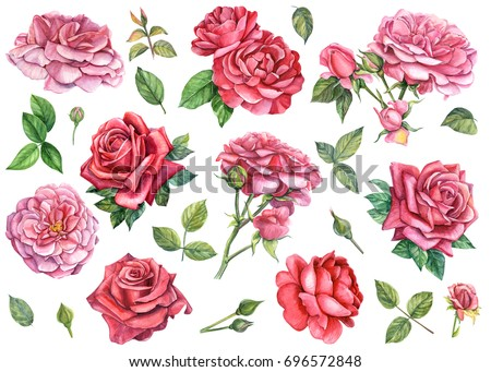 SET OF RED AND PINK ROSES, IN ISOLATED BACKGROUND, WATERCOLOR ILLUSTRATION