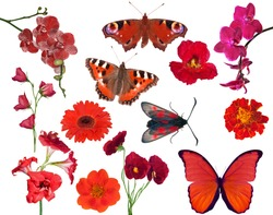 set of red color flowers and butterflies isolated on white background