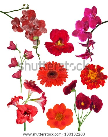 set of red color flowers isolated on white background