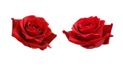 Set of red rose flowers with drops isolated on white