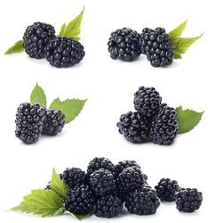 Set of ripe blackberries on white background