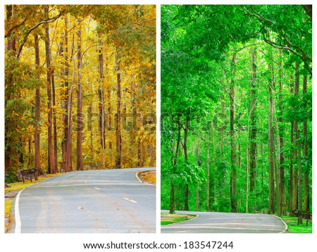 set of Road to the nature forest - Shutterstock ID 183547244