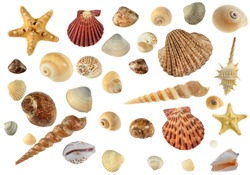Set of sea cockleshells.Hard light. It is isolated on a white background