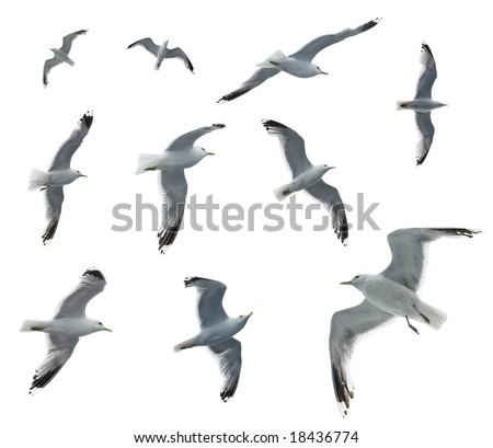 Set of sea gulls isolated on white