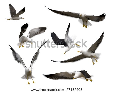 Set of sea gulls isolated on white. Poses of birds express various emotions.