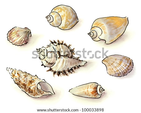 Ocean Shells Drawing Set of Sea Shells Drawing
