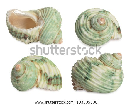Set of sea shells. High res. Isolated on white background