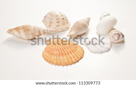 Set of sea shells. Isolated on white background.