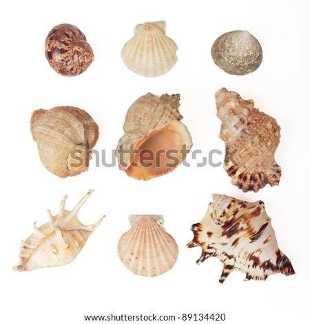 Set of sea shells. Isolated on white, with clipping path.