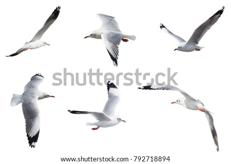 Set of seagulls flying isolated on a white background