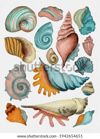 Set of seashells - conch, fan shell, and cockle-shell. Trend color. Sea shells watercolor hand drawn stylized illustration set isolated on white background for banner, poster, print, postcard