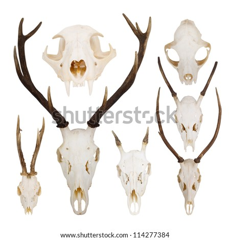set of skulls - stock photo