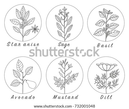 Ink Calendula Herbal Illustration Hand Drawn 500366872 together with 92042 moreover Stock Illustration Herbs Hand Made Drawing together with 270506885 Shutterstock further 269492279 Shutterstock. on culinary herb garden design
