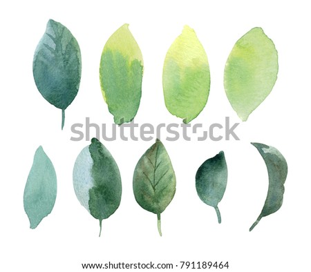 set of spring leaves. hand...