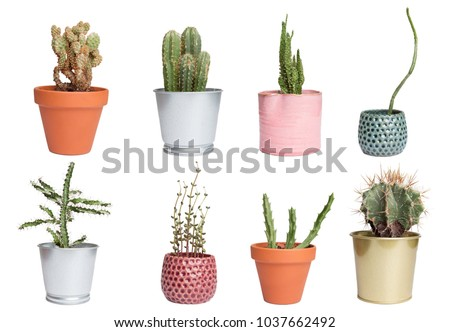 Set of succulents in flowerpots isolated on white