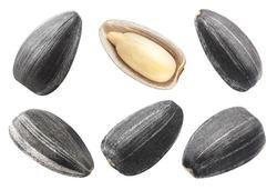 Set of sunflower black seeds, isolated on white background