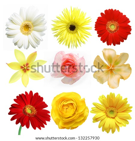set of sweet floras on white background