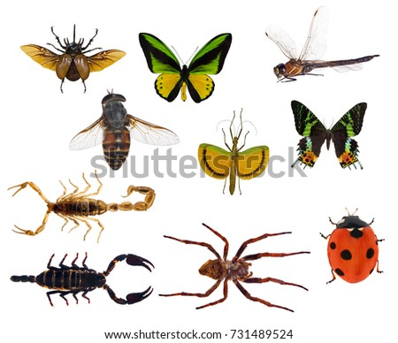 set of ten insects isolated on white background #731489524