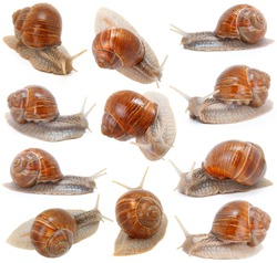 set of the garden snail in front of white background
