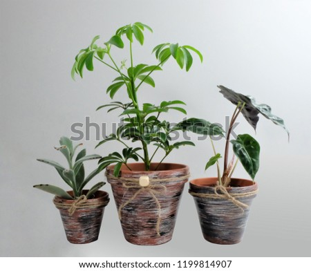 Set of three hand-painted ceramic pots using acrylic paint. Design is rustic looking with jute twine and a button. Dark earthy colours. With plants.