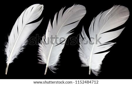 Set of three white bird feather isolated on black background. #1152484712