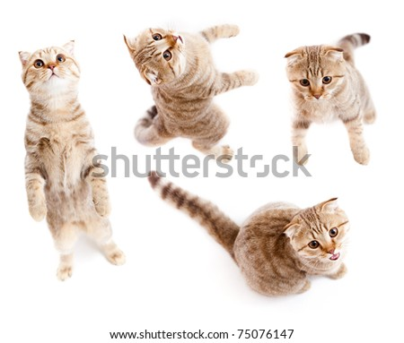 set of top view tabby kitten isolated