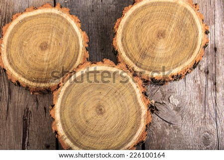 Set of tree stumps round cut with annual rings showing wood circle texture
