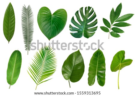 Set of Tropical leaves isolated on white background.