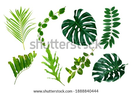 Set of Tropical leaves isolated on white background. Foto stock ©