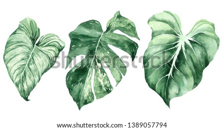 Set of tropical leaves. Jungle, botanical watercolor illustrations, floral elements, palm leaves, fern and others. Hand drawn watercolor set of Anthurium green leaves and home plant, isolated