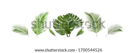 Set of tropical leaves on white background. Banner design