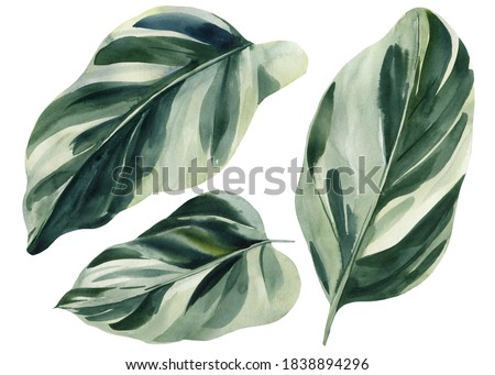Set of tropical leaves on white background, watercolor illustration, wrapping paper, textile or interior wallpaper