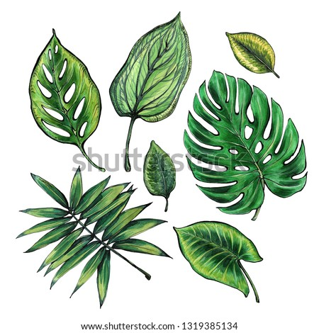 Set of tropical leaves. Watercolor and graphics handmade. #1319385134