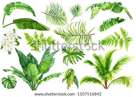 set of tropical plants, palm leaves, banana, liana, monstera, fern, plumeria, green leaves painted in hand-made watercolor, botanical painting