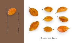 Set of twigs and leaves. Autumn collection of isolated objects. Top view. Minimal concept.