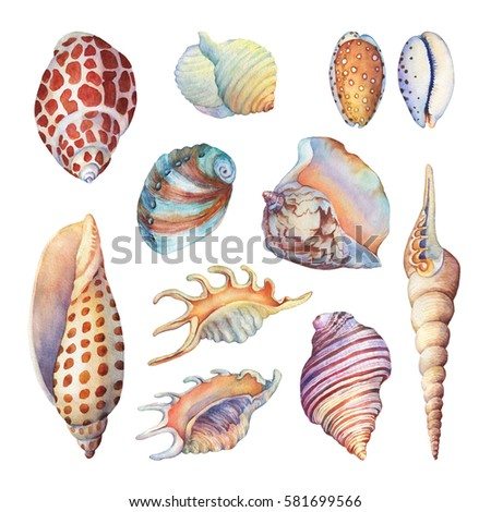 Set of underwater life objects - illustrations of various tropical seashells and starfish. Marine design. Hand drawn watercolor painting on white background.