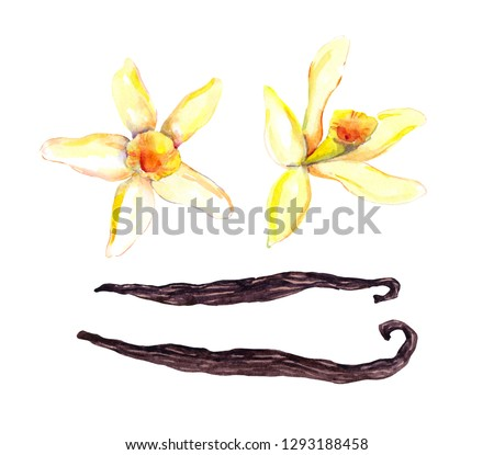 Set of vanilla pods and two orchid flowers. Watercolor