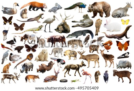 Set of various asian isolated wild animals including birds, mammals, reptiles and insects #495705409