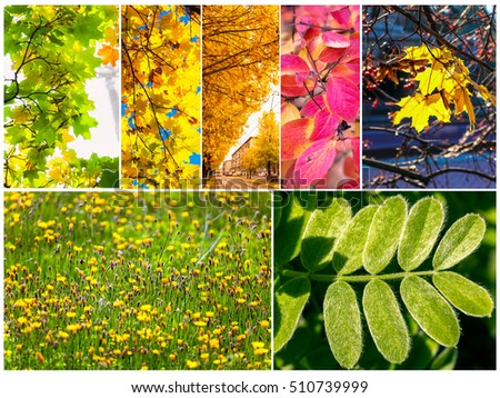 Set of various colorful leaves of trees and plants #510739999