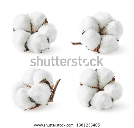 Set of various cotton flowers isolated on white background