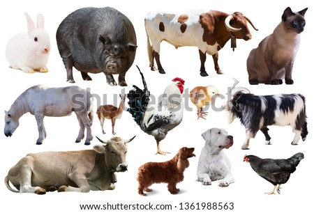 set of various farming animals including cattle and pets isolated #1361988563