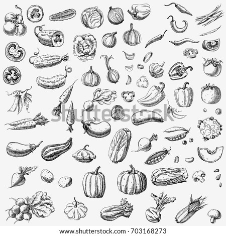 Set of various hand drawn vegetables. Sketches of different food.  #703168273