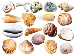 set of various mollusk shells isolated on white background