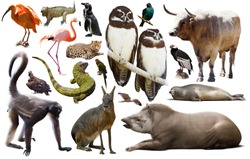 Set of various south american wild birds, animals, reptiles and insects isolated on white.
