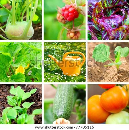 set of vegetable garden